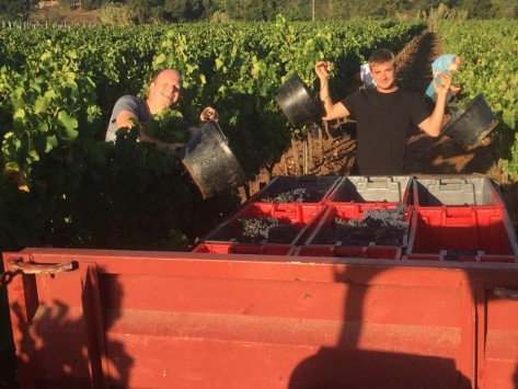 vineyard-3